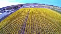 Tulip fields Holland - Keukenhof - Lisse (DJI Phantom 2 drone,  GoPro, Netherlands);  Tulpenvelden