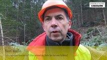 """Environnement : le """"cable-mât"""" pour entretenir les forêts de protection"""