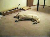 Sleepwalking Dog