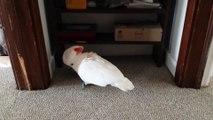 Perroquet pas très content d'aller chez le veto!