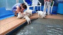 Des chiots se baignent pour la première fois