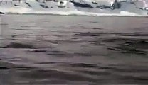 A group of Killer Whales circling their boat. Suddenly they noticed something in...