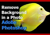 Adobe Photoshop Tutorial - Remove the Background of a Photo (Simple Photo Editing)