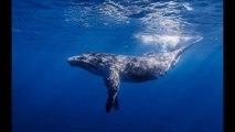 belle île en mer dauphins  full hd 720p , 1024 p