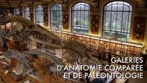 Galeries d'Anatomie Comparée et de Paléontologie - Jardin des Plantes - Paris - France