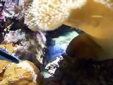 The mysterious of soft corals, sea mushroom (video  fish water marine deep sea pet beach)