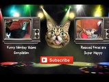 Best Funny Animals Compilation 2014 - Funny Animals - Funny Animal Compilation - Funny Animal Videos