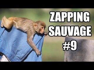 Des singes cambriolent une maison ! - ZS n°9