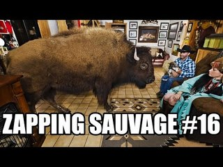 Un bison s'invite à la maison - ZS n°16