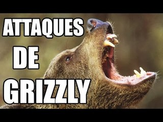 ATTAQUES D'OURS - ZAPPING SAUVAGE
