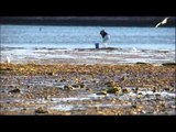 Plongée en basse Californie (extrait2) Thalassa
