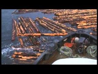Les aventuriers du bois (extrait) - Thalassa