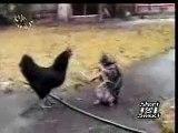New videos in www.mycats.ir(3)