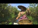 Les jardiniers du lac Inlé - Faut Pas Rêver au Myanmar/Birmanie (extrait)