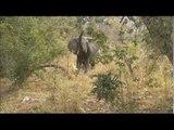 Sauvons les éléphants - Faut pas rêver au Mozambique (extrait)