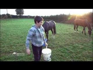Les petits jockeys de Glenbeigh