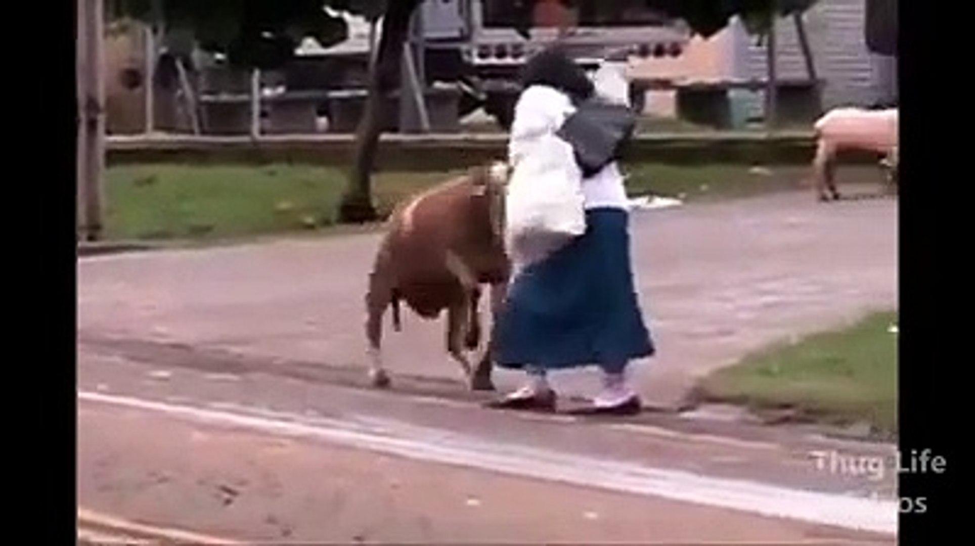 Pet Animals Rock - Funny pet animals - Funny Video