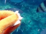 feeding to the tropical fishes by underwater camera (video  marine deep sea pet beach)