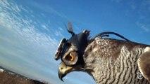 Vivre la chasse d'un aigle comme si vous y étiez : caméra subjective POV