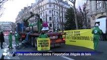 Greenpeace: un tronc d'arbre géant au ministère de l'Ecologie