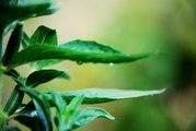 Serenity Ambient Zen Garden, Nature Sound Relax Meditation Mix by DJ Gami.K