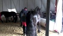 Les frisons du cirque Arlette Gruss - Entretien avec John Vernuccio