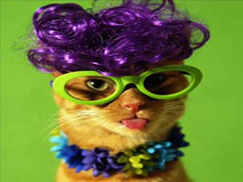 Gatos chistosos ( Funny cats)