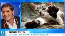 La maladie des griffes du chat transmise à l'homme : quels symptômes ?