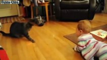 Funny videos Animals   Babies - Best Of Babies Laughing Hysterically At Dogs And Cats Compilation