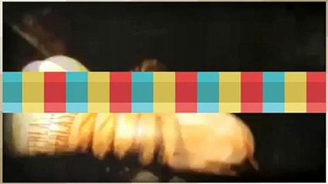 Watch Kevin Satchell v Walter Rojas - friday night fights live - friday night fights schedule 2015 - friday night fights 2015