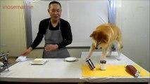 Un cuisinier japonais et son assistant pas très doué en cuisine : normal c'est un chien
