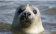 BBC Radio 4 - Farming Today, Seals on salmon farms 6Mar15