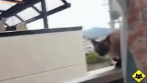 FUNNY VIDEOS  Funny Cats - Funny Cat Videos - Funny Animals - Fail Compilation - Cats Jump Fails