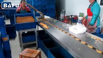 chocolate packaging machine, flow wrapper,flow pack machine,horizontal packaging machine