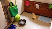 Un furet installe son nid dans une salle de bain