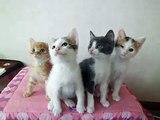 【こねこ】可愛いすぎる子猫 右左右