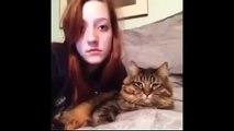 Funny cat vines Epic Funny Cats 10 Minutes Funny Cats Compilation November 2014