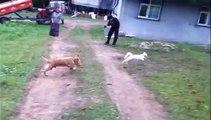 Chat malin contre chien... stupide !