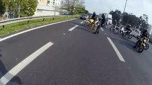Des motards sauvent un chien sur la route