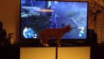 Un chat est fan du chien dans Assassin's Creed III