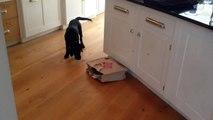 Un chiot prend peur d'un chat dans une boite ! MDR !