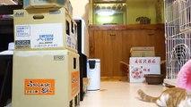 Des bébés chats VS un robot télécommandé ! Trop délire !