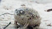 Böyle Kurbağa'yı İlk Defa Göreceksiniz!