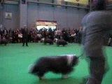 Offenbach Crufts 2007
