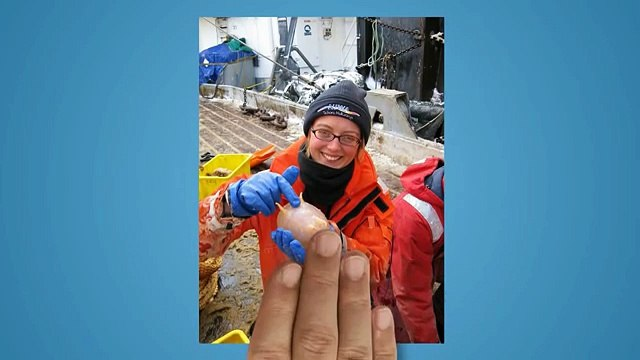 5 Creatures found below Antarctic Ice;;;;;;;