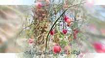 جی هَلو هَالو مَنی بلوچستان - وهاب بلوچ
