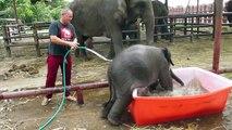 Un éléphanteau prend un bain dans une bassine