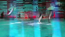 Delfinai ir žvaigždės 7dalis [2-2]