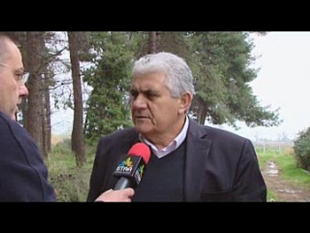 Κόντρα δημοτικής αρχής και αντιπολίτευσης στον Ορχομενό για το πρόγραμμα υλοτόμησης επικίνδυνων δένδρων