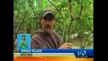 Desbordamiento del río Chanchán afecta 80 hectáreas de plantaciones